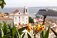 Portugal, Lisbon, flower in front of the city with Tejo River and cruise liner in the background - CMF00596