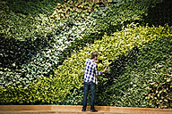 Young man standing in front of green plant wall, placing potted plant - WESTF21886