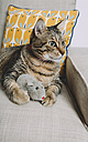 Tabby cat lying on armchair with toy rat watching something - GEMF01201