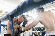 Two boxers fighting in boxing ring - MADF01249
