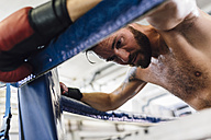 Boxer resting in boxing ring - MADF01252