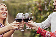 Happy friends in a vineyard clinking red wine glasses - ZEDF00422