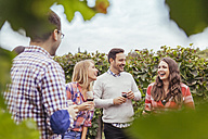 Friends in a vineyard holding glasses of red wine - ZEDF00431
