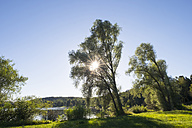 Germany, Baden-Wuerttemberg, Vogelsee near Krauchenwies - SIEF07143