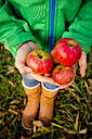Girl's hands holding apples - LVF05600