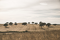 Portugal, Setubal, Field with trees - CHPF00326