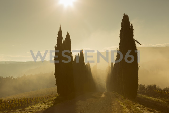 Italy, Tuscany, Val d'Orcia, cypress avenue in morning fog - FCF01147