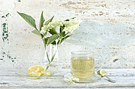 Elder flower tea, elderflowers and  lemon slices - ASF06054