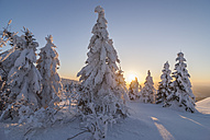 Germany, Lower Saxony, Harz National Park, Wolfswarte in winter at evening twilight - PVCF00934