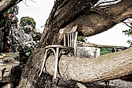 Wooden chair on tree trunk - FMKF03254