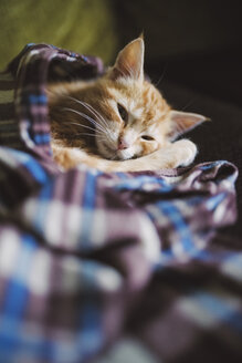 Tabby kitten resting on a blanket - RAEF01582