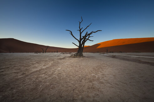 Namibia, Namib Naukluft, Dead Vlei, dead camel thorns in front of desert dune - MPAF00095