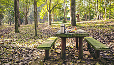 Picnic place in the forest - DAPF00488