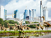 Germany, Frankfurt, view to skyline with goose family in the foreground - KRPF02040