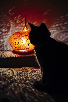 Silhouette of cat sitting on the couch next to a handmade pumpkin lamp - GEMF01274