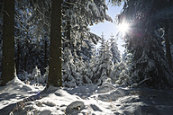 Germany, Thuringia, snow-covered winter forest at morning sunlight - VTF00564