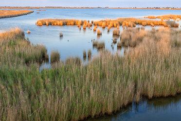 Spain, Tarragona, Ebro Delta, Encanyssada lagoon at sunset - DSGF01176