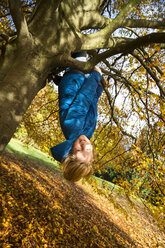 Boy climbing on tree in autumn - SARF03081