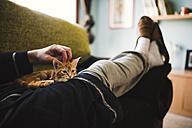 Tabby kitten relaxing on the lap of owner - RAEF01595