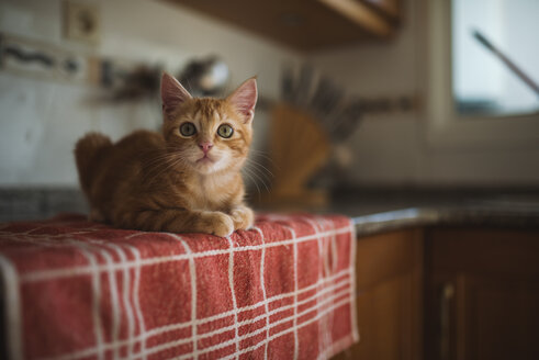 Portrait of kitten crouching on towel in the kitchen - RAEF01598