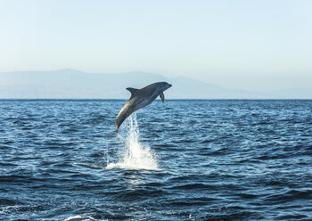 Spain, bottlenose dolphin jumping in the air - KBF00351