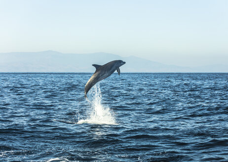 Spain, bottlenose dolphin jumping in the air - KBF00351