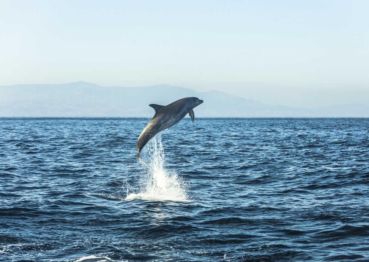Spain, bottlenose dolphin jumping in the air - KBF00351 - Sebastian Kanzler/Westend61