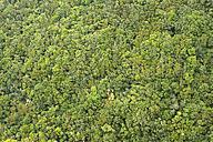 Spain, Tenerife, Taganana in the Anaga mountains, lush vegetation - DSGF01307