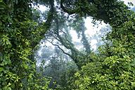 Spain, Tenerife, Laurel Tree in Parque Rural de Anaga - DSGF01310