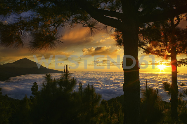 Spain, Tenerife, sunset at Teide National Park - DSGF01319 - David Santiago Garcia/Westend61
