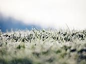 Frozen grass - KRPF02076