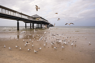 Germany, Usedom, Heringsdorf, seagulls at pier - SIEF07221