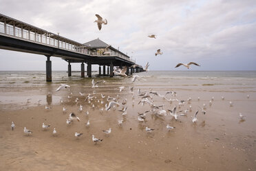 Germany, Usedom, Heringsdorf, seagulls at pier - SIEF07221
