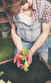 Young gardener planting lettuce in container - RTBF00576