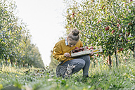 Young woman with crate and cat in apple orchard - KNSF00720