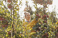 Young woman harvesting apples - KNSF00732