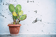 Greece, Milos, Cactus in front of cracked wall - GEMF01316