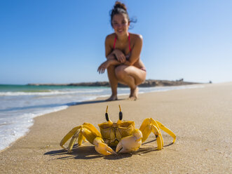 Oman, Ash Shirayjah, Ad Daffah, horned ghost crab on the beach with tourist in the background - AMF05150