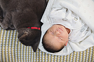 Newborn baby girl sleeping on the couch next to a gray cat - GEMF01349