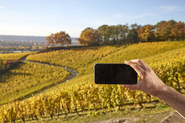 Cell phone picture in a vineyard - FMKF03363
