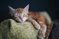 Portrait of tabby cat sleeping on the backrest of a couch - RAEF01627