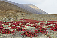 Peru, chili pods lying on ground to dry - FOF08540