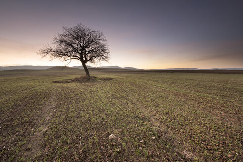 Lonely tree at scenic sunset - DHCF00023