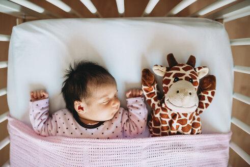 Newborn baby girl sleeping in crib with a plush giraffe - GEMF01379