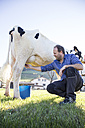 Farmer milking a cow on pasture - ABZF01762