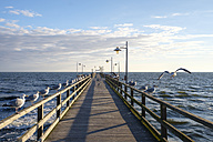 Germany, Usedom, Bansin, seagulls at pier - SIEF07253