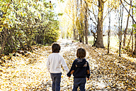 Back view of two little boys walking hand in hand on autumnal country road - VABF01024