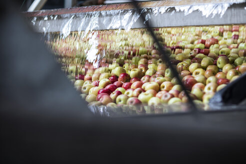 Apples in factory wrapped up in plastic - ZEF12430