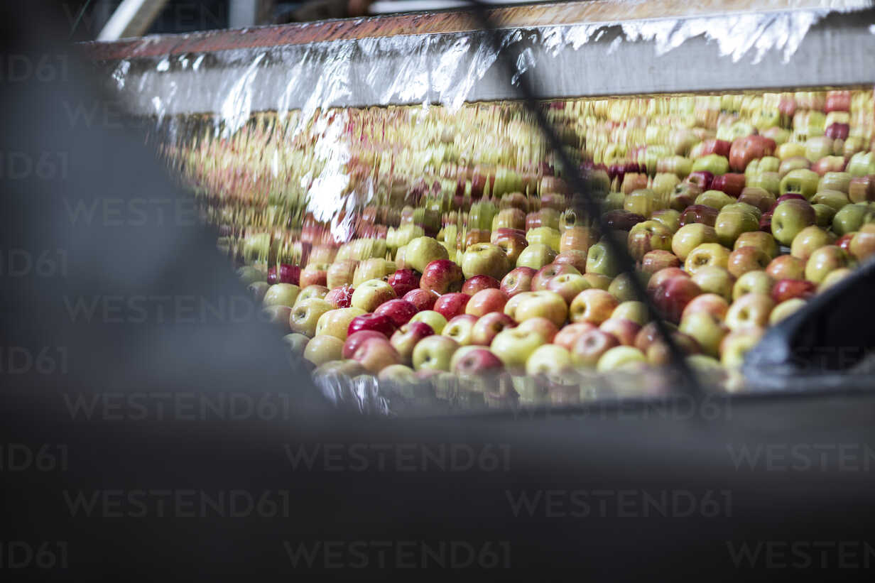 Apples in factory wrapped up in plastic - ZEF12430 - zerocreatives/Westend61