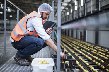 Man sorting out apples in food processing plant - ZEF12436
